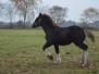 Foals 2016