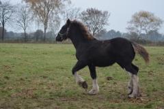 2016-Foal-Amber