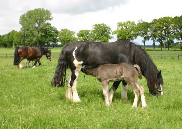 Mares-with-faols-may-2014-1