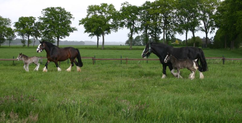 Mares-with-faols-may-2014-2