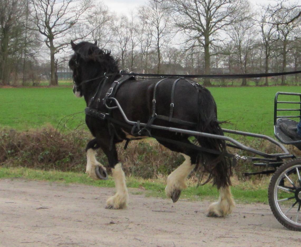 Sale-Blackbrooke-Glennifer-01-2012-broken-for-carriage