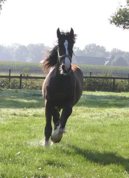 Shires-in-the-field-aug-2014-6