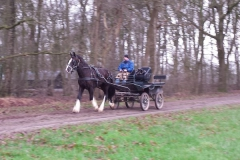 Carriage-2015-Glennis-driving-02