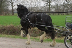Sale-Blackbrooke-Glennifer-01-2012-broken-for-carriage