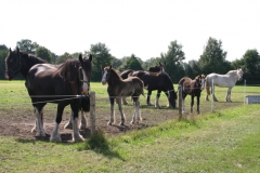 Shires-in-the-field-aug-2014-2
