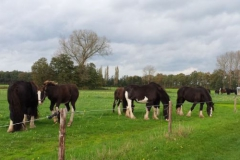 Shires-in-the-field-okt-2014